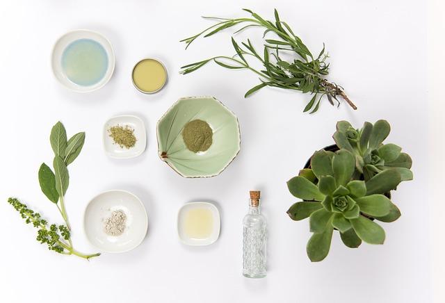植物とお皿